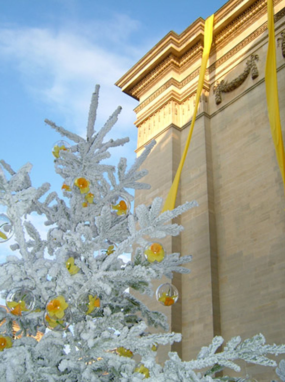 Pantheon-Curie-Jonquilles-hiver