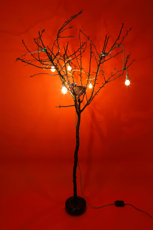 les lumières de la forêt